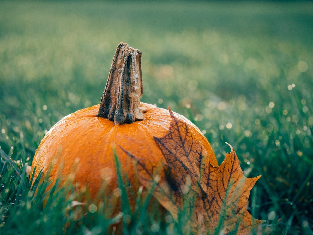 October Half Term Harvest Fun 2017, Savill Garden