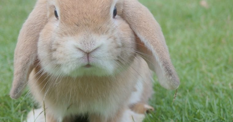 What's on this Easter in Berkshire 2018