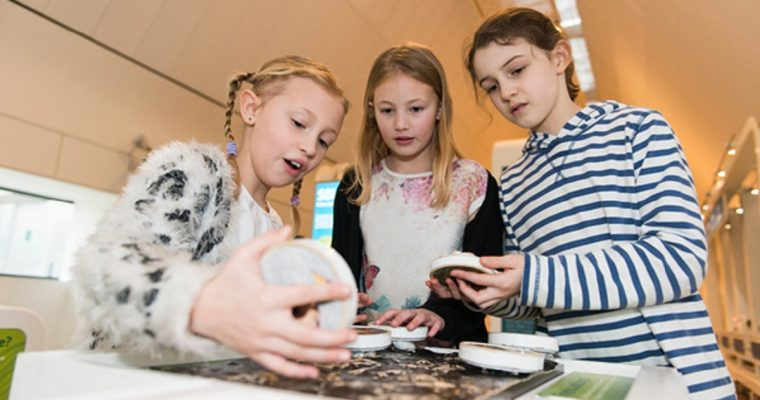 Merry May Half Term Fun at the River & Rowing Museum