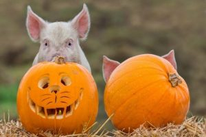 Odds Farm halloween 2018 buckinghamshire