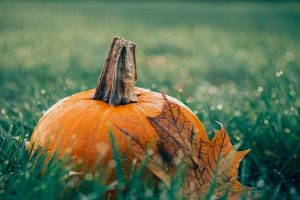 Squash & pumpkin festival hardwick estate reading berkshire 30 september 2018